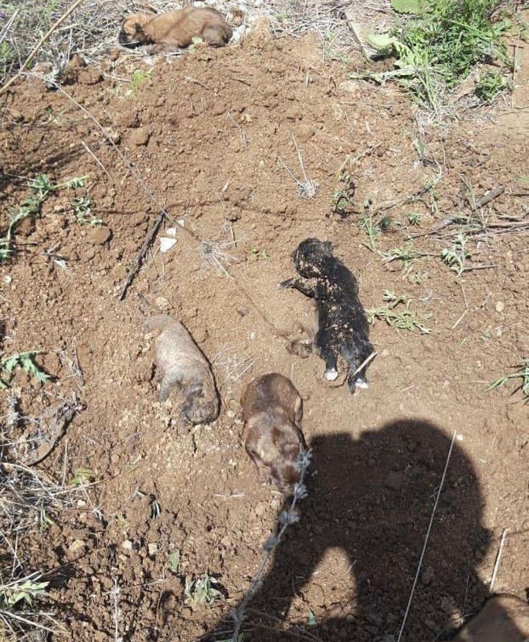 фото Закопали заживо: новосибирцев шокировало найденное в поле шевелящееся захоронение 2