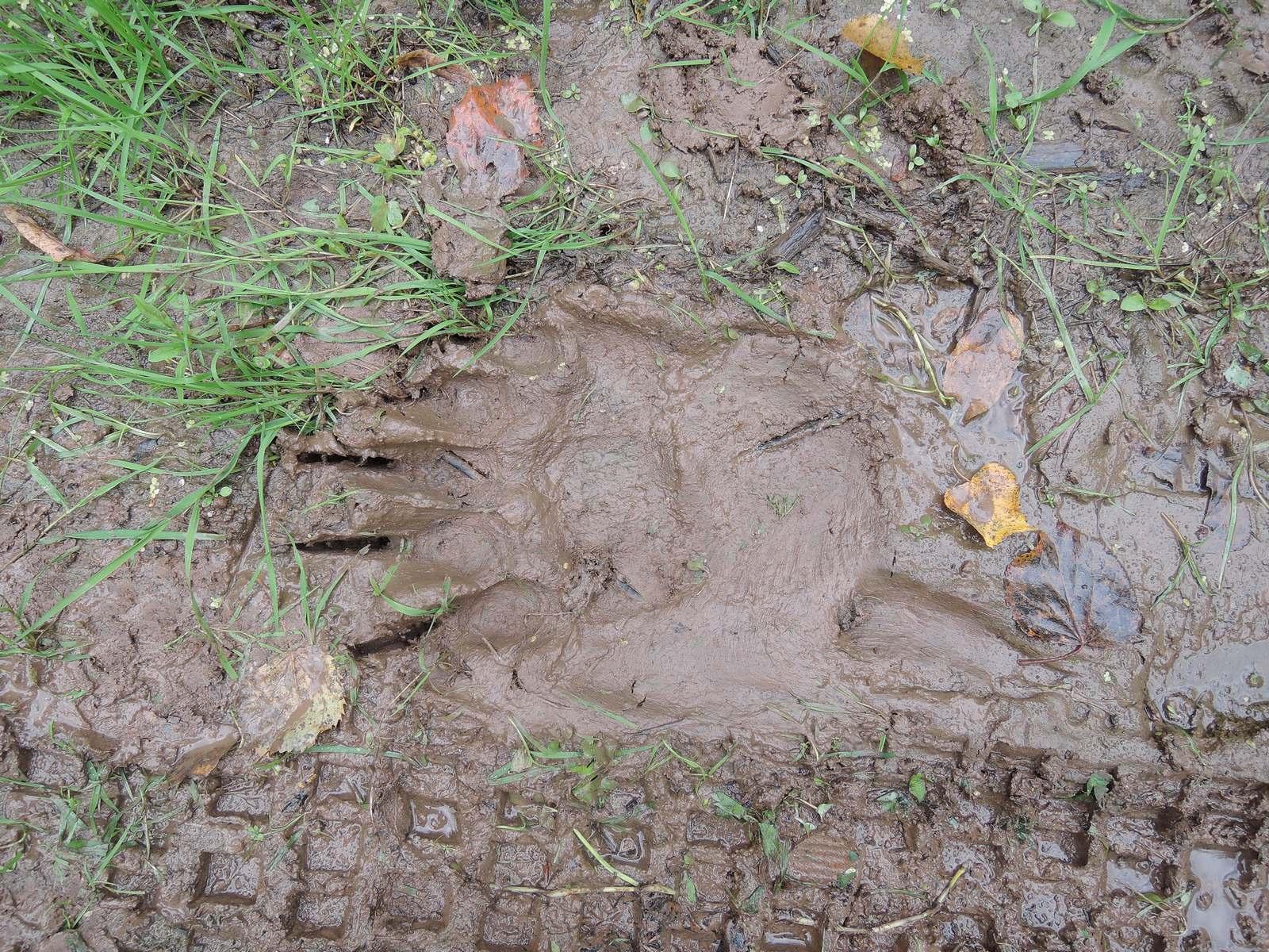 фото Медведь задрал геодезиста на Сахалине 2