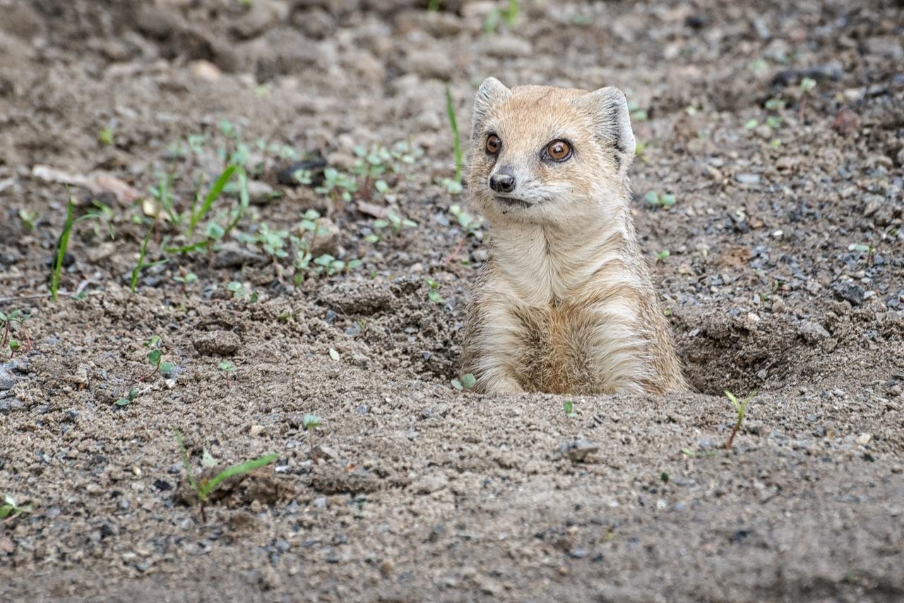 фото «А где все?»: Новосибирский зоопарк показал скучающих по посетителям животных 4
