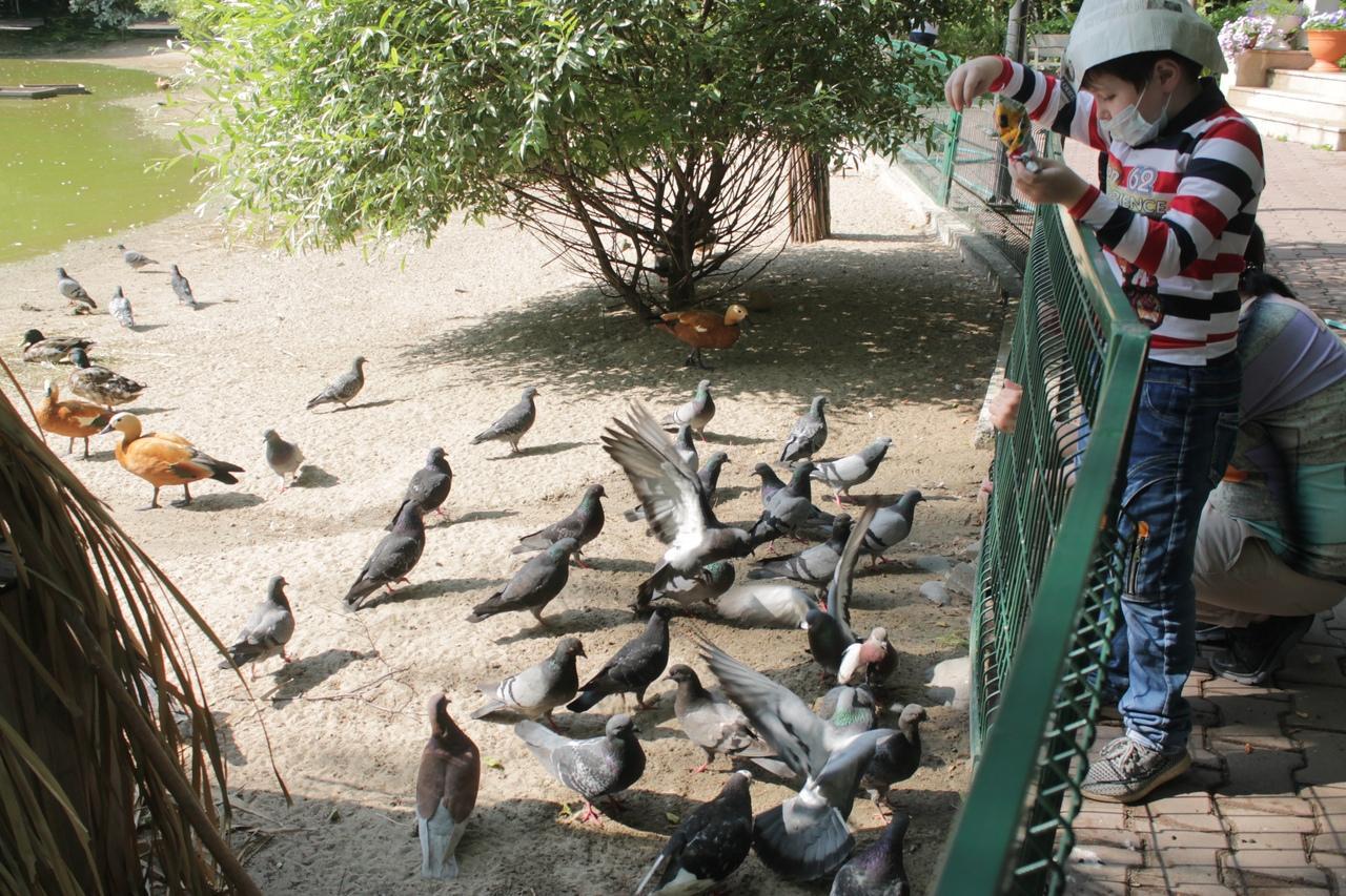 Фото Заждались гостей: Новосибирский зоопарк возобновил работу после карантина 9