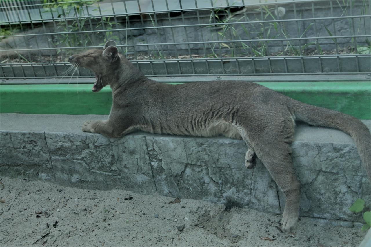 Фото Заждались гостей: Новосибирский зоопарк возобновил работу после карантина 11