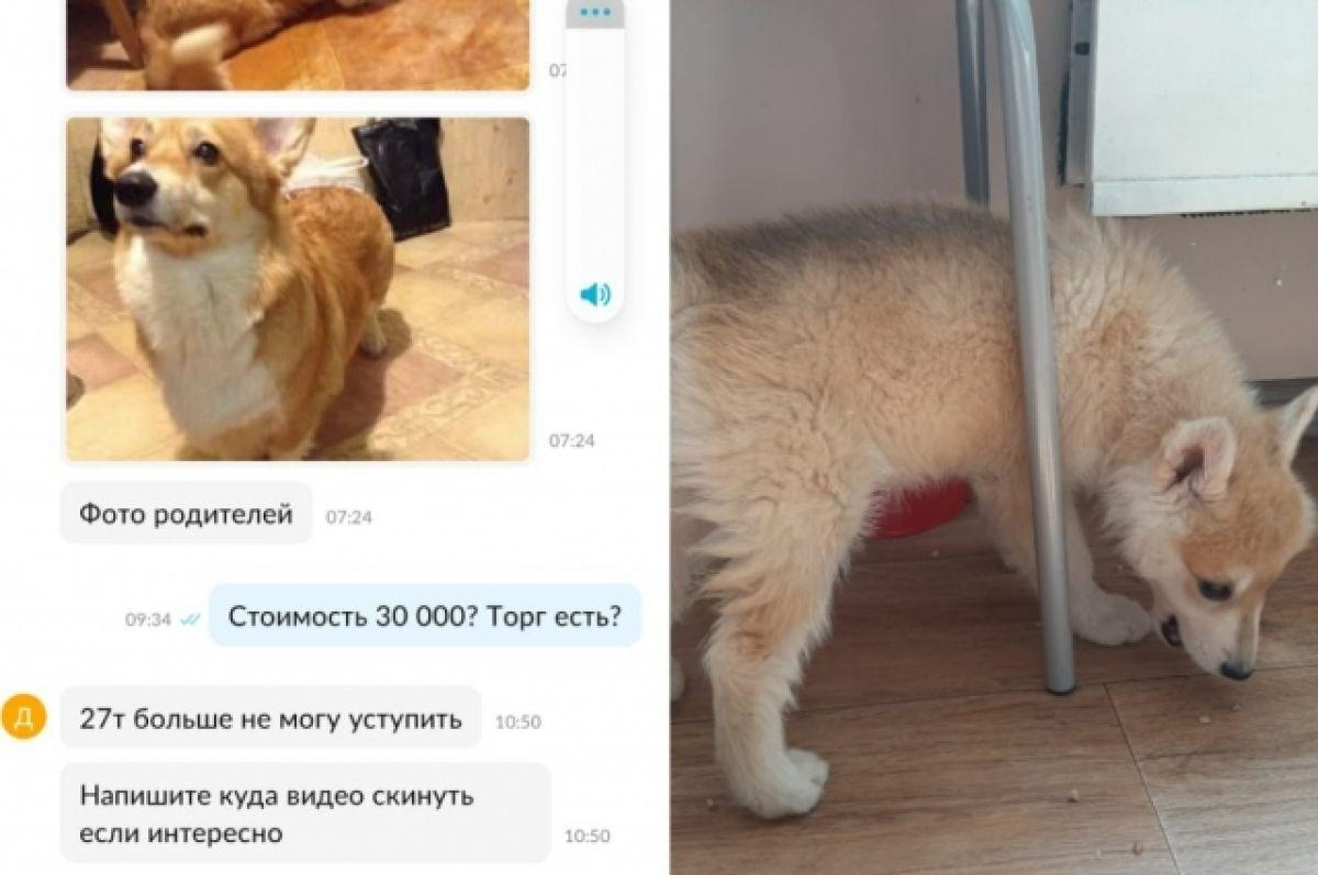 фото Обязательная вакцинация от COVID-19 в Новосибирске, результаты ЕГЭ по русскому и золото на первенстве Европы по женской борьбе: главные новости 18 июня – в одном материале 10