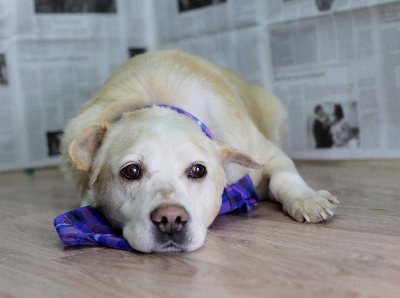 фото «Его мечта – тепло человеческих рук»: познавший боль и предательство Барни из приюта стал первым финалистом конкурса «Главный пёсик Новосибирска» 7