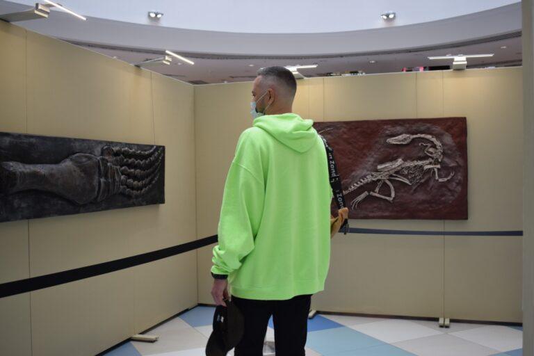 Фото В Новосибирске открылась палеонтологическая выставка 4