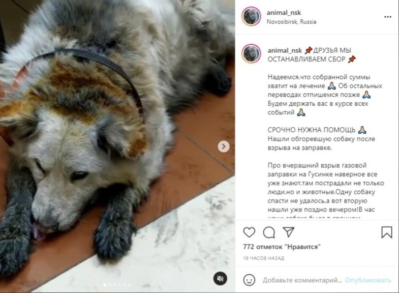 фото В Новосибирске спасают обгоревшую при взрыве на АГЗС собаку 2