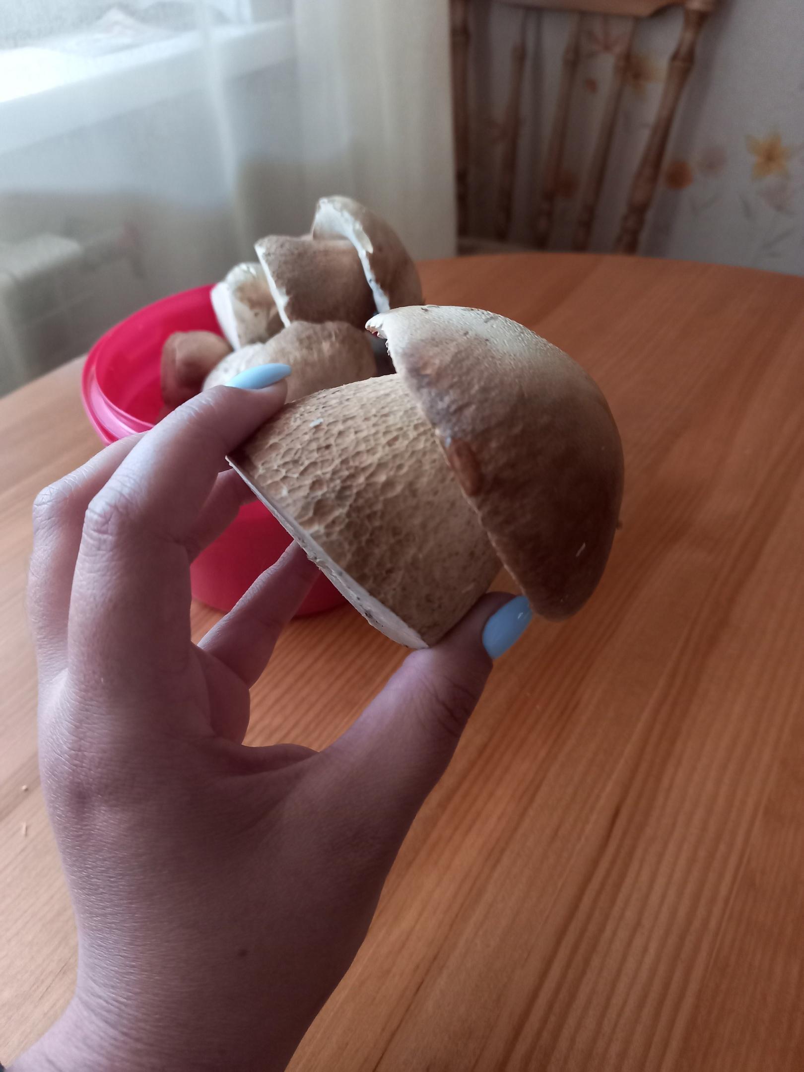 фото Сезон белых грибов стартовал в Новосибирске 5