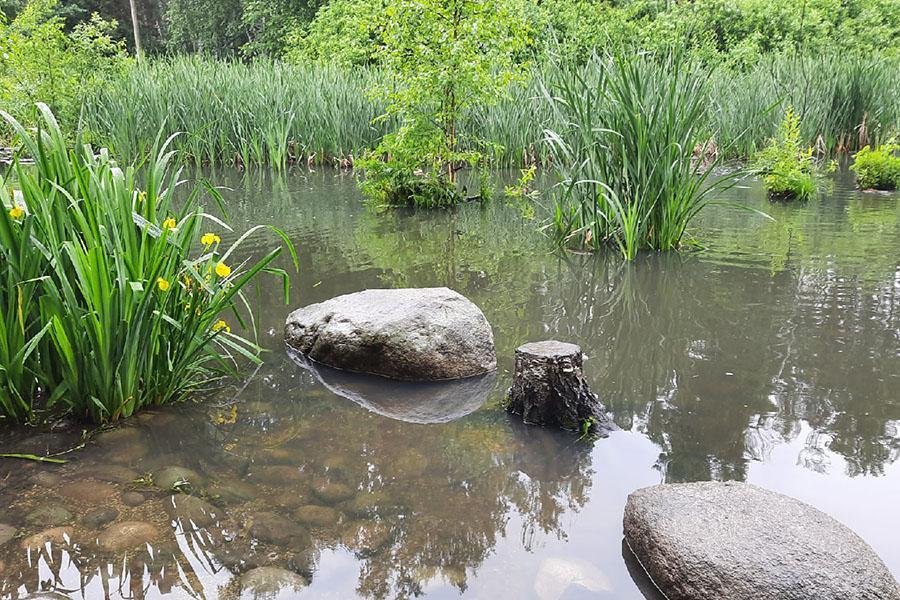 Фото Знаменитый пруд с утками в Академгородке очистят с помощью цветов из Африки 2