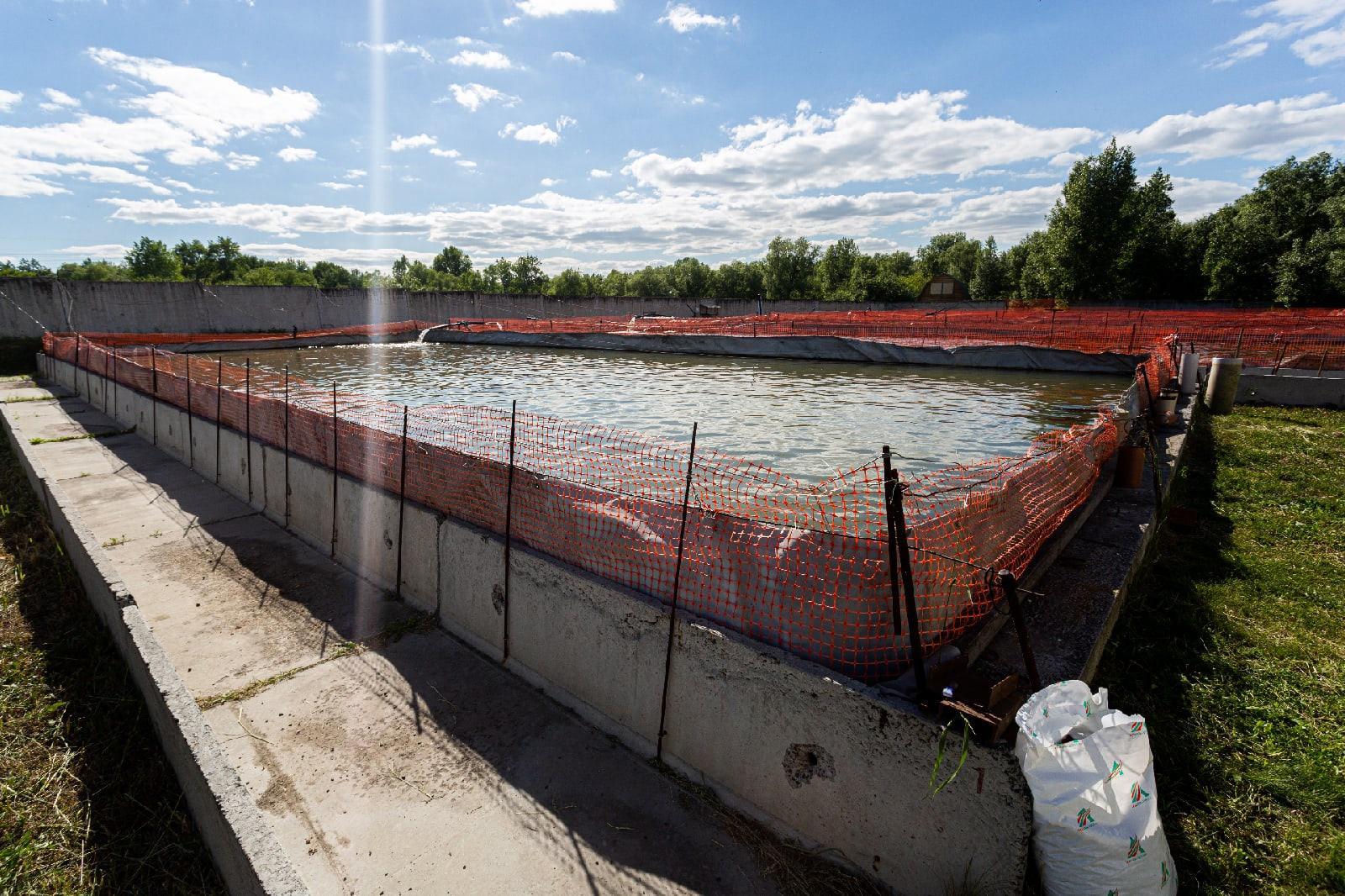 фото 800 тыс сеголеток краснокнижного осётра выпустят в Обь в 2021 году в Новосибирске 4