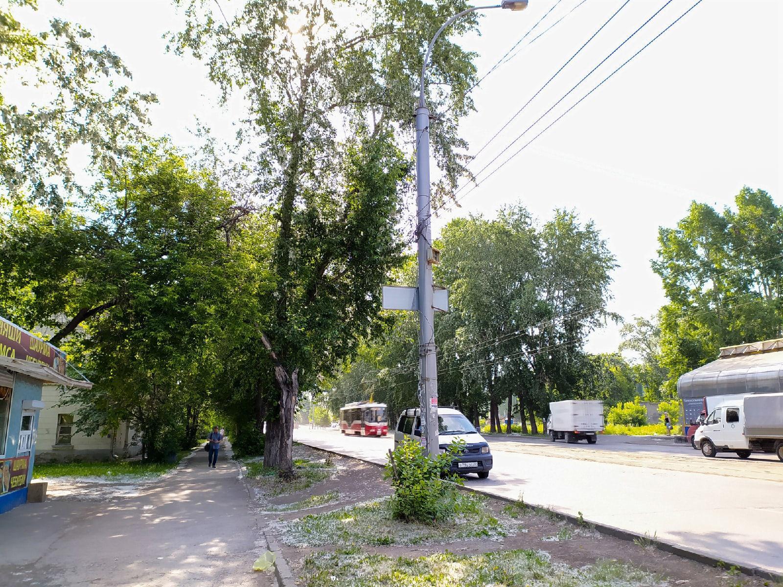 фото Сезон тополиного пуха начался в Новосибирске 2