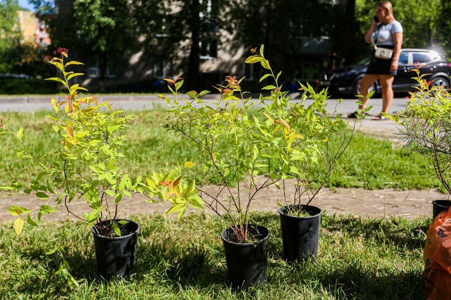 Фото Экологическая акция «Зелёный двор» пришла в Новосибирск 6
