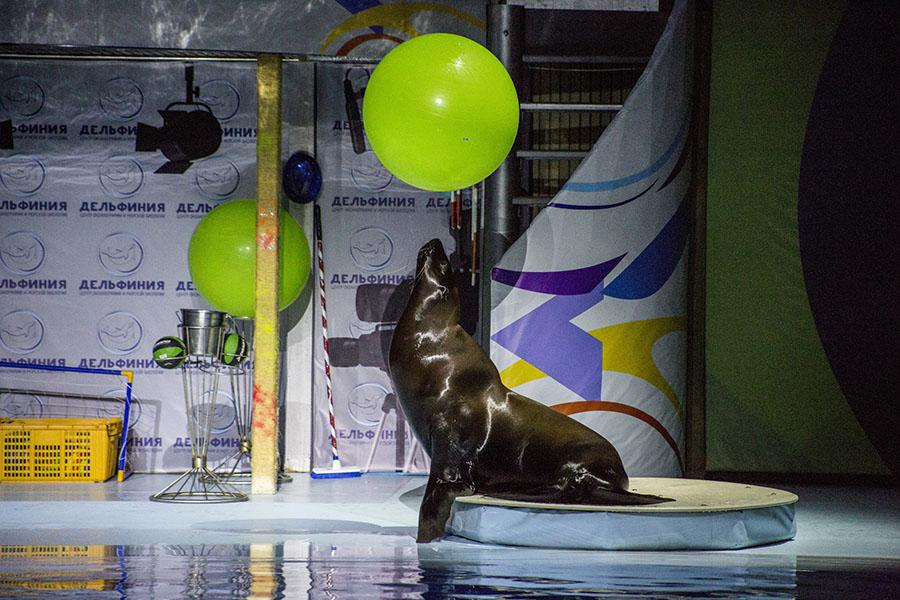 фото На старт! Внимание! Марш! В новосибирском океанариуме открыли первые «Дельфинийские игры» 4