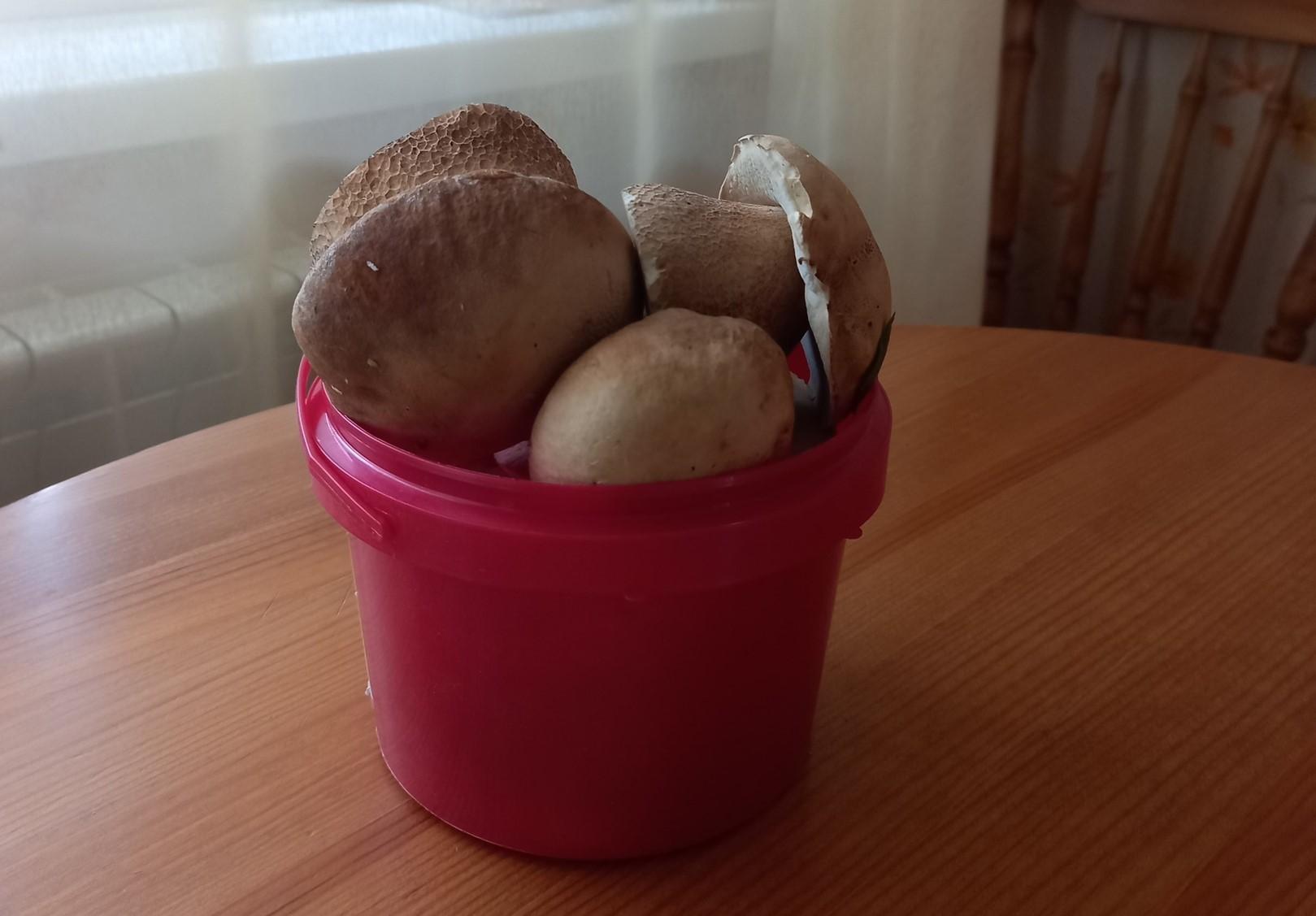 фото Сезон белых грибов стартовал в Новосибирске 4