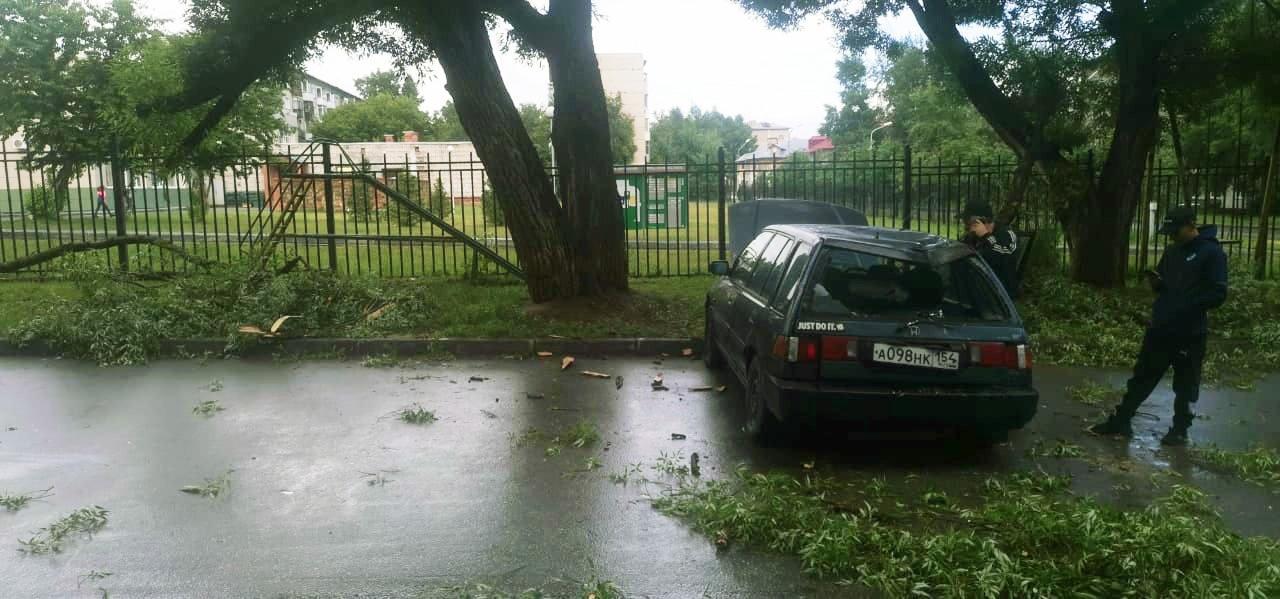 фото В Новосибирске упавшее дерево серьёзно повредило автомобиль 3