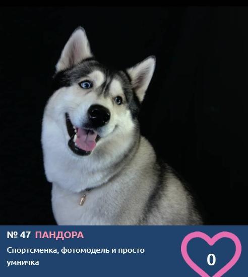фото Фотомодель, спортсменка и цирковая плясунья: знакомим с участниками конкурса «Главный пёсик Новосибирска» 4