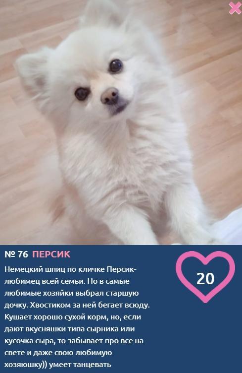 Фото «Сама милота, красота и доброта»: более 20 фотоснимков маленьких участников конкурса «Главный пёсик Новосибирска» 9