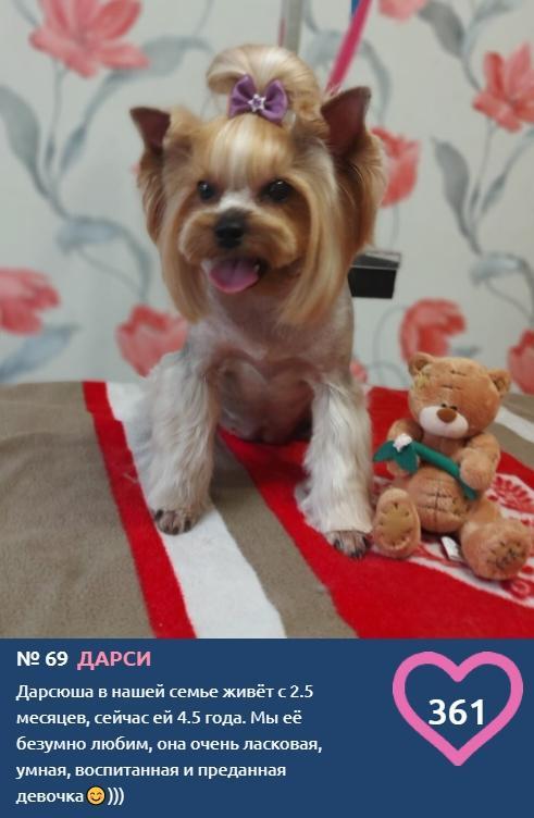 Фото «Сама милота, красота и доброта»: более 20 фотоснимков маленьких участников конкурса «Главный пёсик Новосибирска» 10