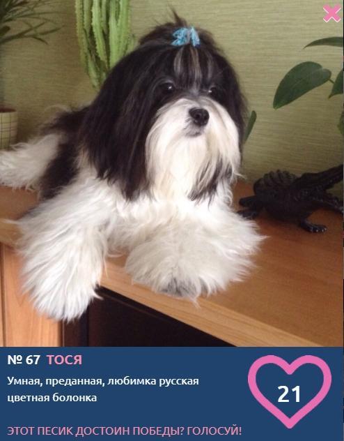 Фото «Сама милота, красота и доброта»: более 20 фотоснимков маленьких участников конкурса «Главный пёсик Новосибирска» 11