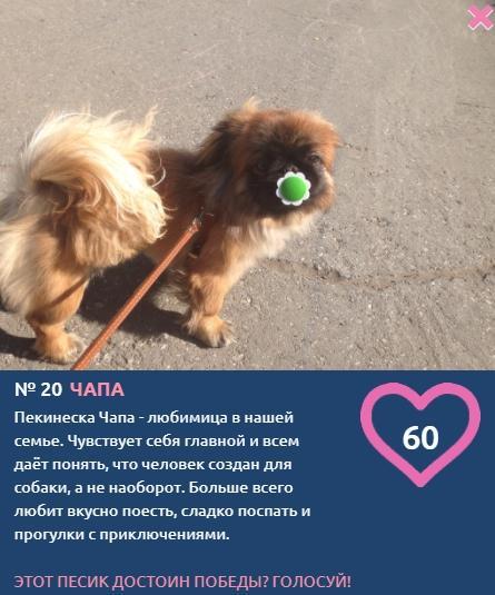 Фото «Сама милота, красота и доброта»: более 20 фотоснимков маленьких участников конкурса «Главный пёсик Новосибирска» 21