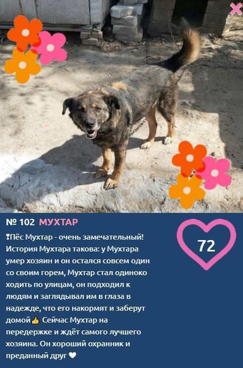 фото Хозяин участника конкурса «Главный пёсик Новосибирска» умер – улыбчивый Мухтар ищет новый дом 2