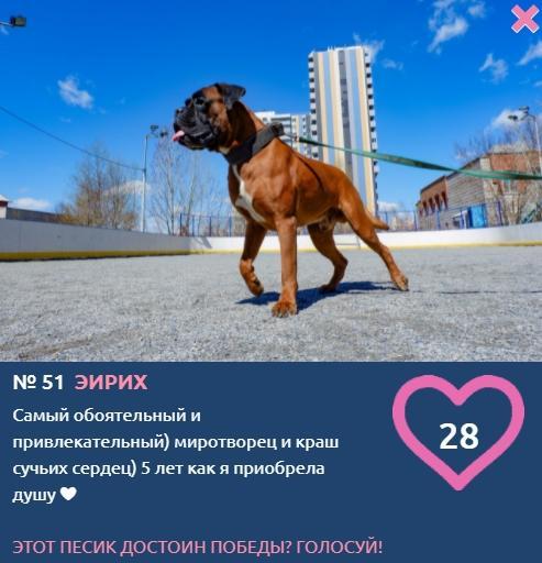 фото Покоритель девичьих сердец, миротворец и любимец детей: бруталы конкурса «Главный пёсик Новосибирска» с нежной душой 4
