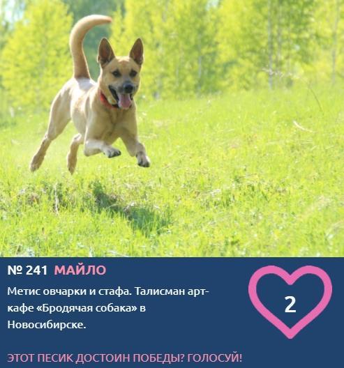 фото Талисман арт-кафе «Бродячая собака» стал участником конкурса «Главный пёсик Новосибирска» 2