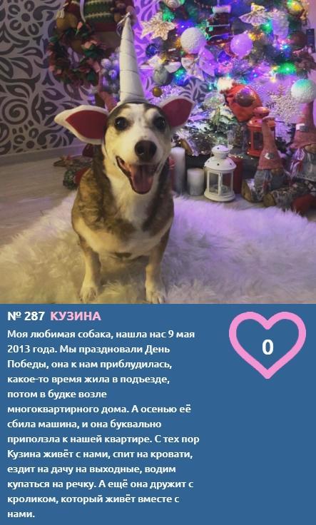 Фото Выжившая после аварии Кузина подружилась с кроликом и борется за победу в конкурсе «Главный пёсик Новосибирска» 2