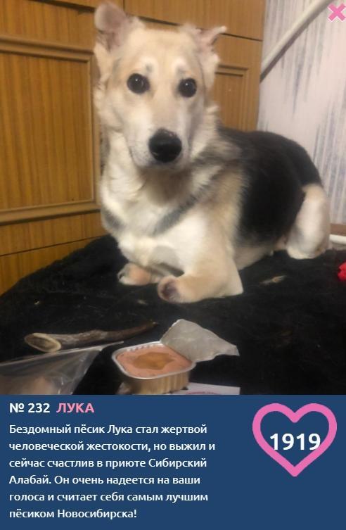 фото Чудом спасшийся от живодёров безногий Лучик стал участником конкурса «Главный пёсик Новосибирска» 2