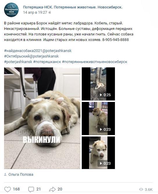 фото «Его мечта – тепло человеческих рук»: познавший боль и предательство Барни из приюта стал первым финалистом конкурса «Главный пёсик Новосибирска» 3