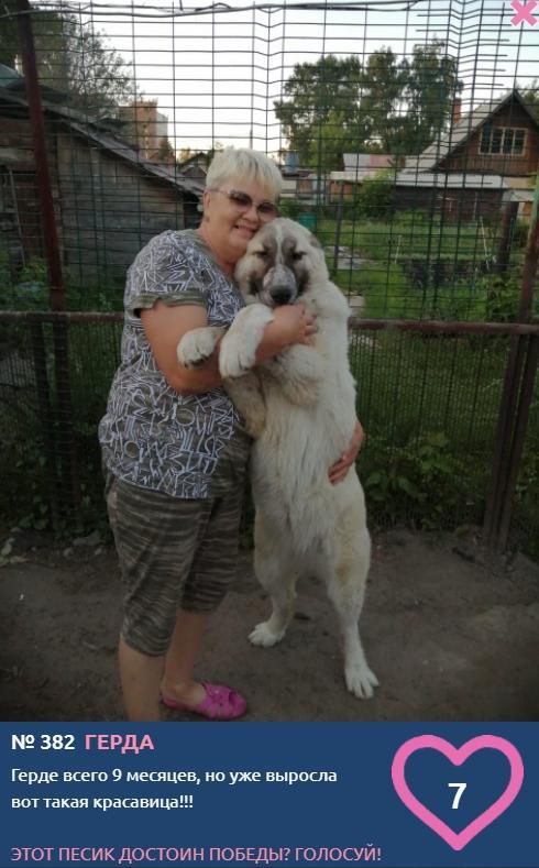 Фото Похожи ли хозяева на своих собак: лучшие совместные фото конкурса «Главный пёсик Новосибирска» 6