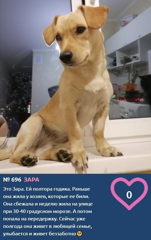 Фото Улыбчивая Зара сбежала от злых хозяев и борется за победу в конкурсе «Главный пёсик Новосибирска» 2