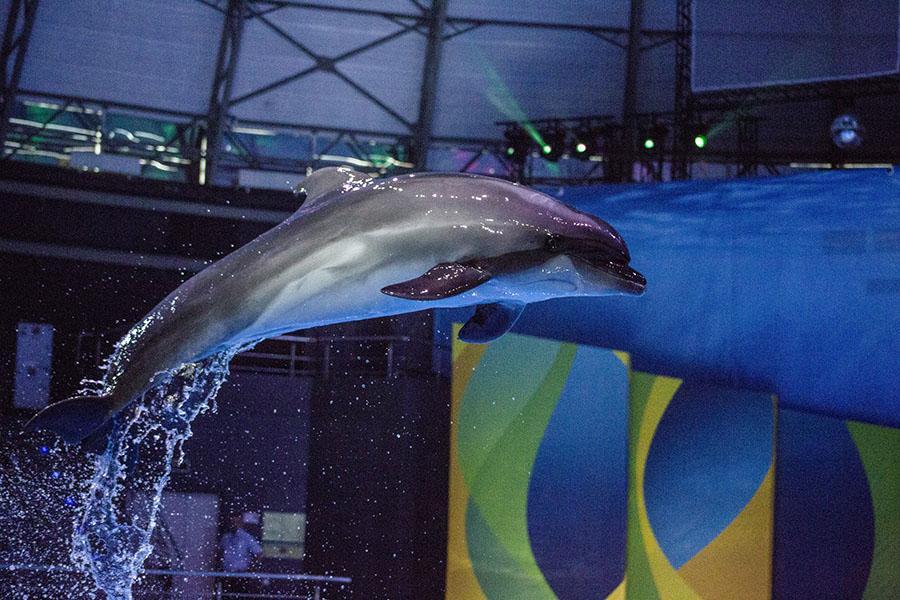 фото На старт! Внимание! Марш! В новосибирском океанариуме открыли первые «Дельфинийские игры» 5