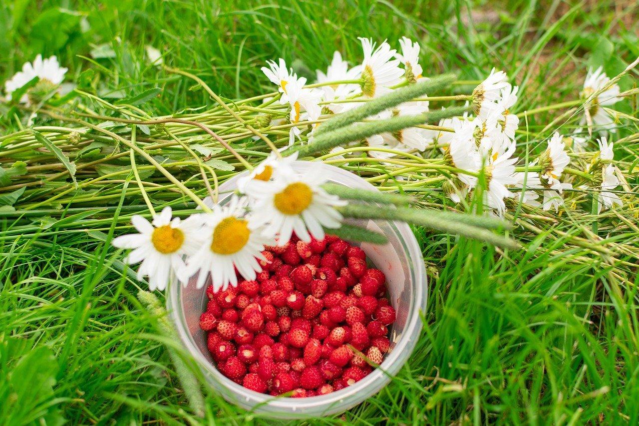 Фото Самые простые и вкусные рецепты варенья из клубники и лесной земляники летом 2021 года 2