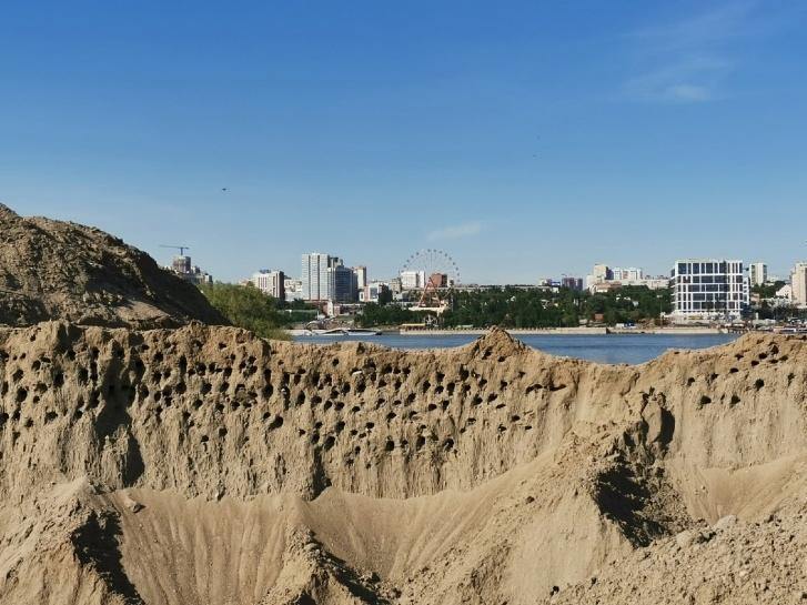 фото Сотни краснокнижных береговых ласточек могут погибнуть из-за стройки ЛДС в Новосибирске 2