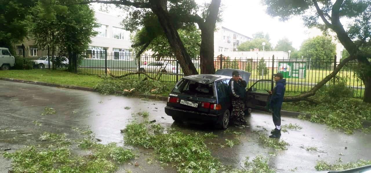 фото В Новосибирске упавшее дерево серьёзно повредило автомобиль 2