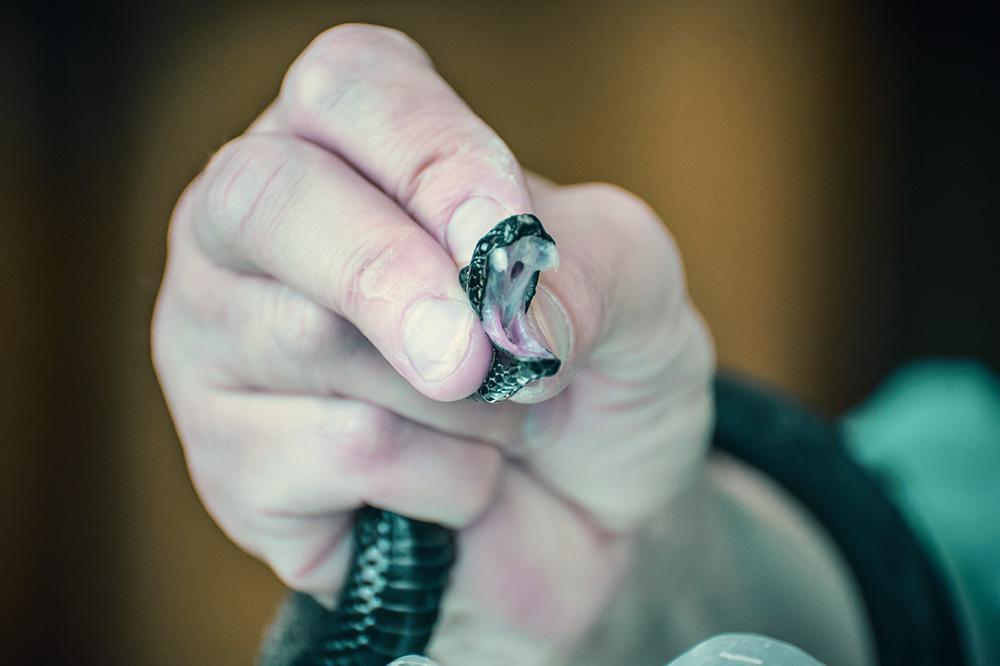 фото Повелители змей 15