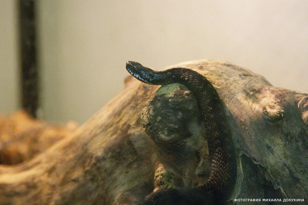 фото Повелители змей 26