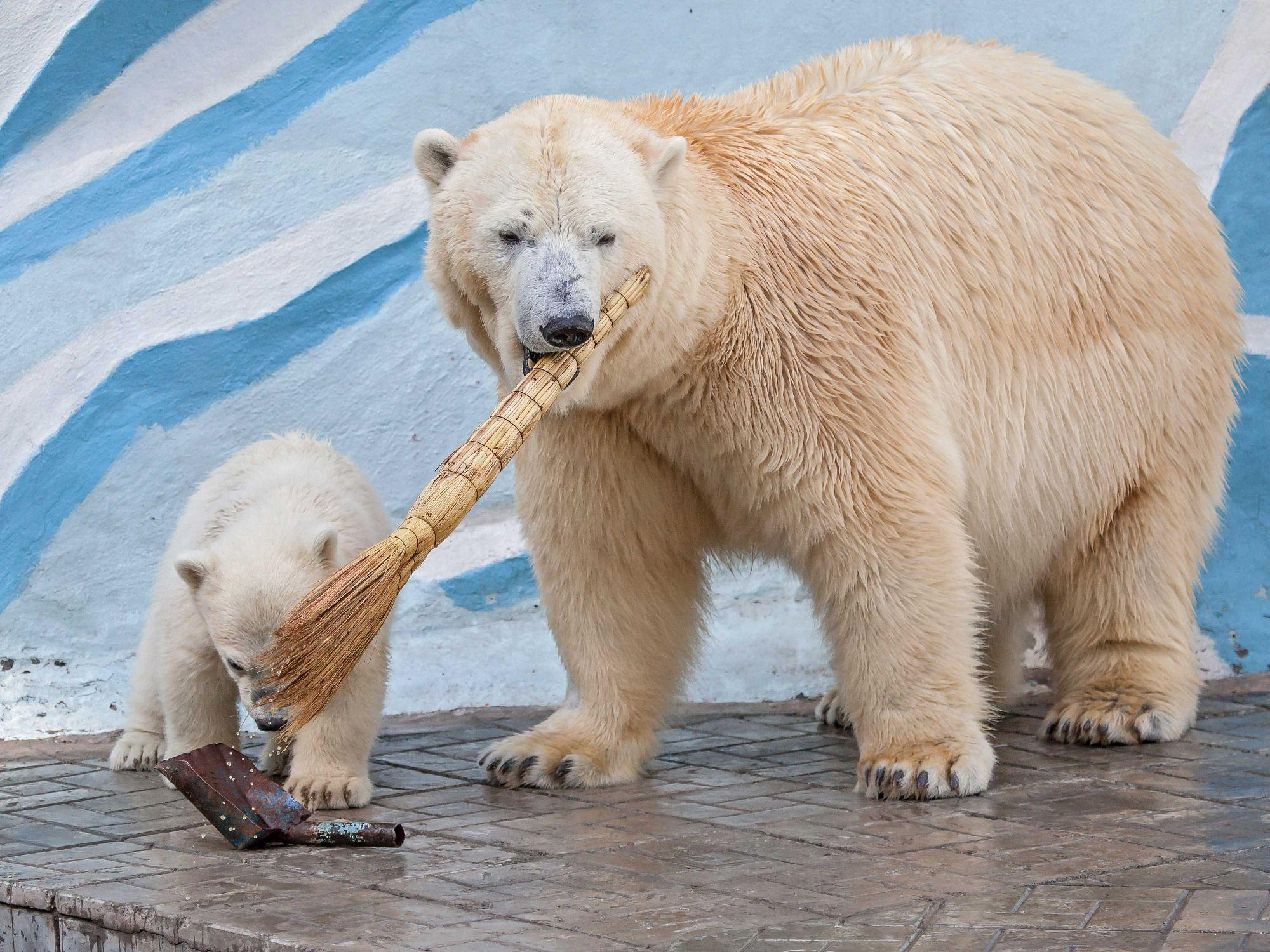 Картинка зоопарк медвежата