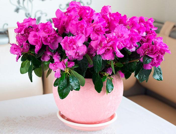 Фото Жёлтые тюльпаны – не вестники разлуки: что на самом деле означают цветы к 8 Марта 2