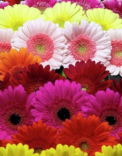 Фото Жёлтые тюльпаны – не вестники разлуки: что на самом деле означают цветы к 8 Марта 6