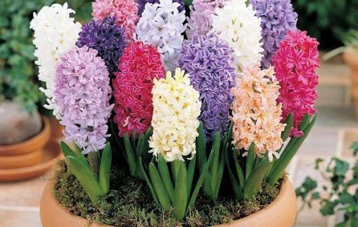 Фото Жёлтые тюльпаны – не вестники разлуки: что на самом деле означают цветы к 8 Марта 7