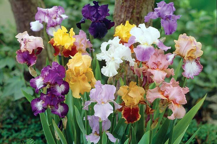 Фото Жёлтые тюльпаны – не вестники разлуки: что на самом деле означают цветы к 8 Марта 8