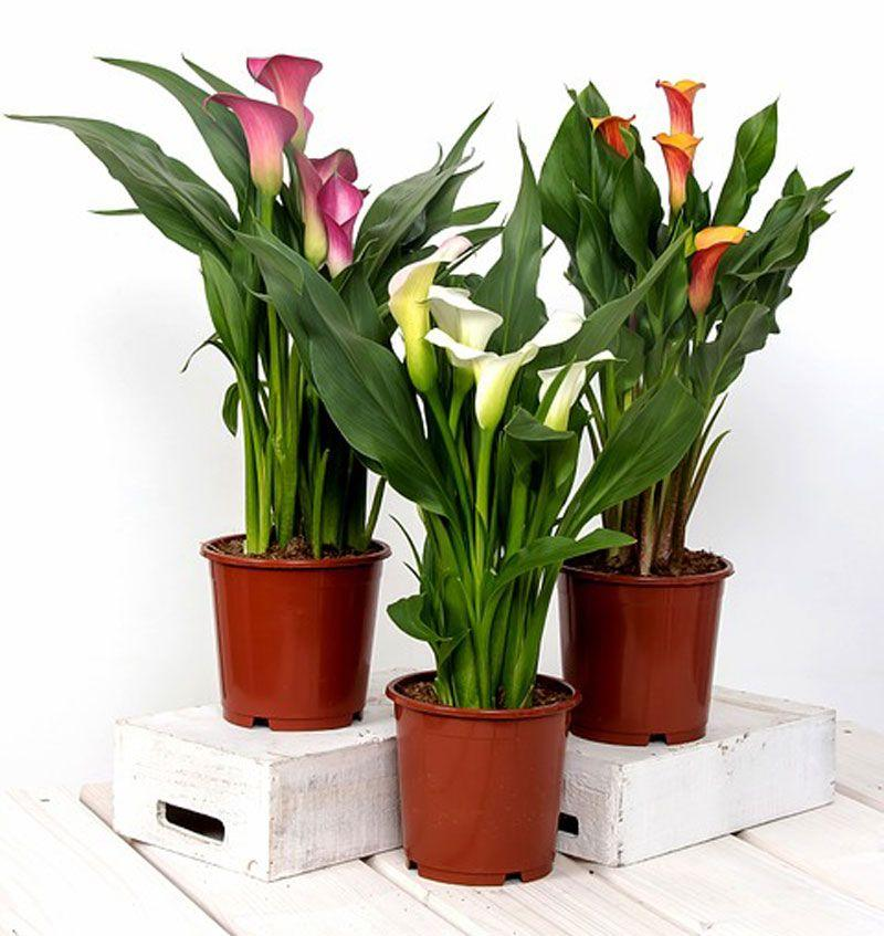 Фото Жёлтые тюльпаны – не вестники разлуки: что на самом деле означают цветы к 8 Марта 9