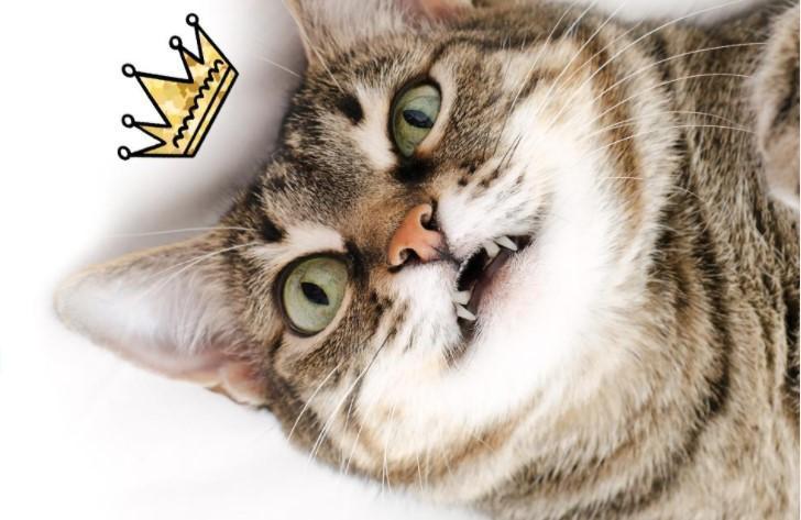 фото Главный котик Новосибирска, реанимация для почётного жителя и визит Мишустина – итоги недели на Сиб.фм 2