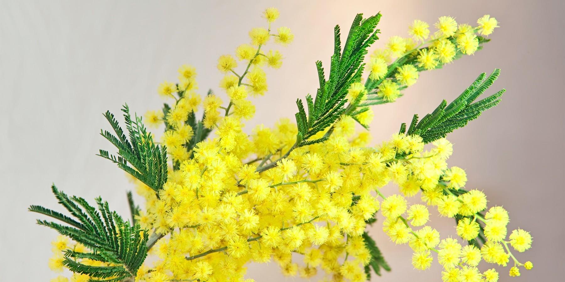Фото Жёлтые тюльпаны – не вестники разлуки: что на самом деле означают цветы к 8 Марта 11