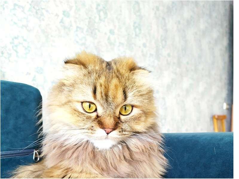 фото Своенравная Фифа, эмигрант Кефир и охотница за солнечными зайчиками Варвара: продолжается конкурс «Главный котик Новосибирска» 2