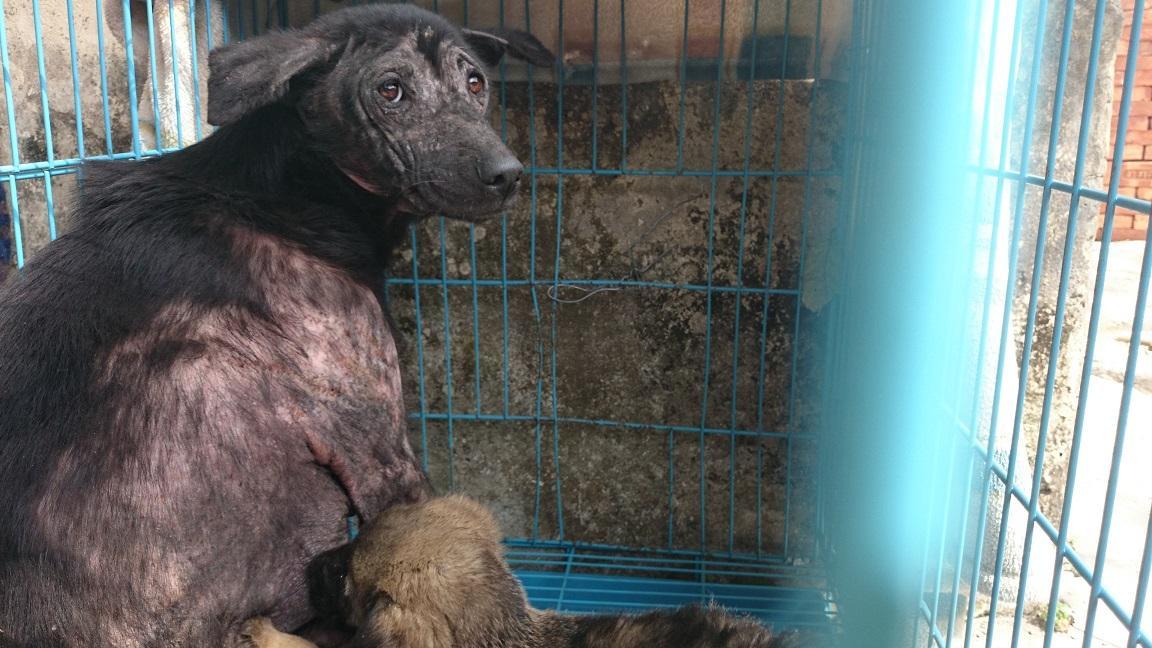 фото «Ад, на который психически здоровый человек не сможет смотреть»: зачем новосибирцы спасают бродячих собак в Абхазии и Индии 3