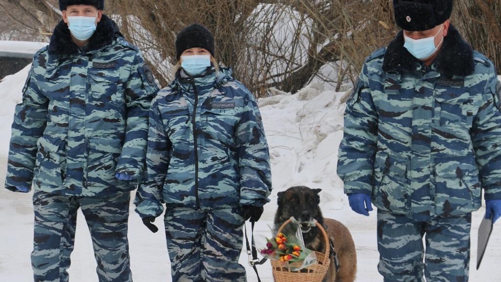 Фото Полицейский пёс Фугас цветами поздравил томичек с наступающим 8 Марта 3