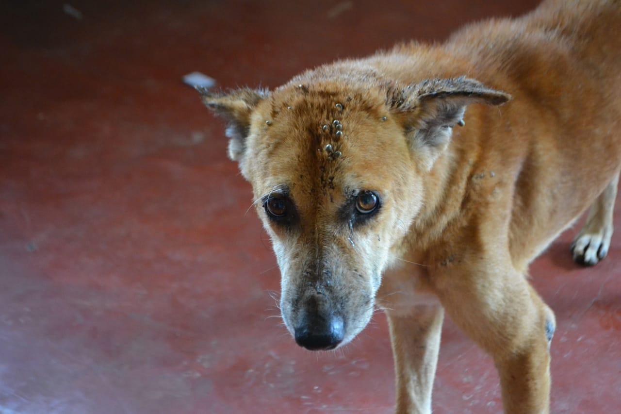 фото «Ад, на который психически здоровый человек не сможет смотреть»: зачем новосибирцы спасают бродячих собак в Абхазии и Индии 19