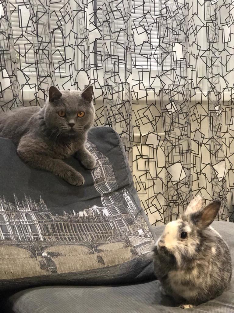 фото Дружба со спаниелем и кроликом: финалист конкурса «Главный котик Новосибирска» Грей оказался выходцем из большой семьи 4