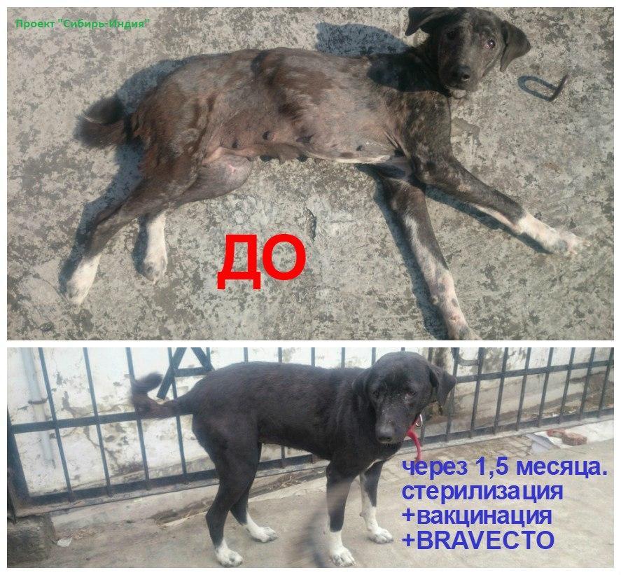 фото «Ад, на который психически здоровый человек не сможет смотреть»: зачем новосибирцы спасают бродячих собак в Абхазии и Индии 9